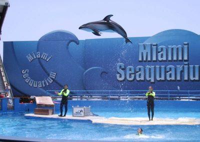 2001 Miami12