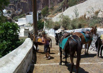 2008 Greece62