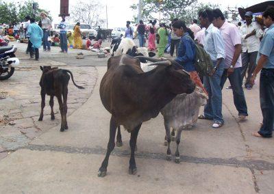 2008 India02