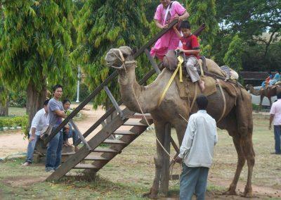 2008 India50