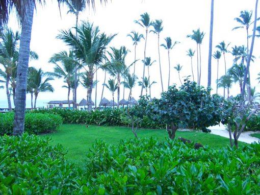 2010 Dominican Republic
